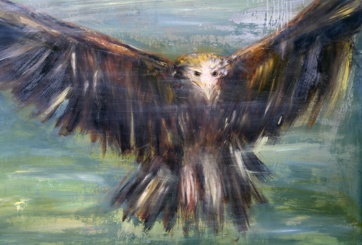 RODNEY POPLE |  Endangered (Eagle 2) 2016 |Oil on plywood  |110 x 140 cm